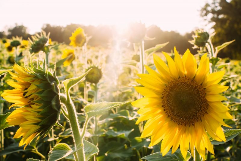 Training for Life - Module 3. Solar Plexus: The Power of Being